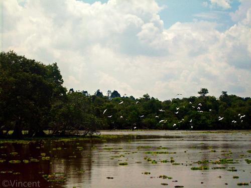 Reserve naturelle de Tra Su à Châu Dôc