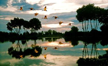 parc national Ca Mau